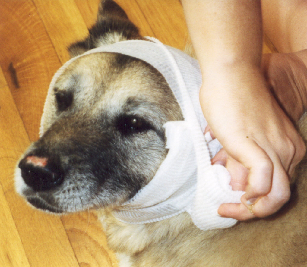 fall 2008 newsletter buddha dog